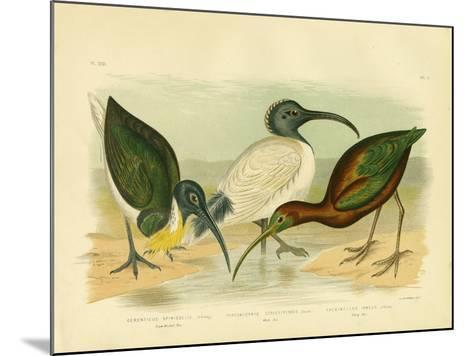 Straw-Necked Ibis, 1891-Gracius Broinowski-Mounted Giclee Print