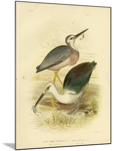 White-Faced Heron, 1891-Gracius Broinowski-Mounted Giclee Print