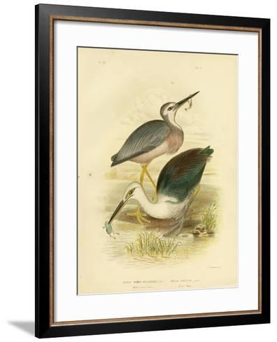 White-Faced Heron, 1891-Gracius Broinowski-Framed Art Print