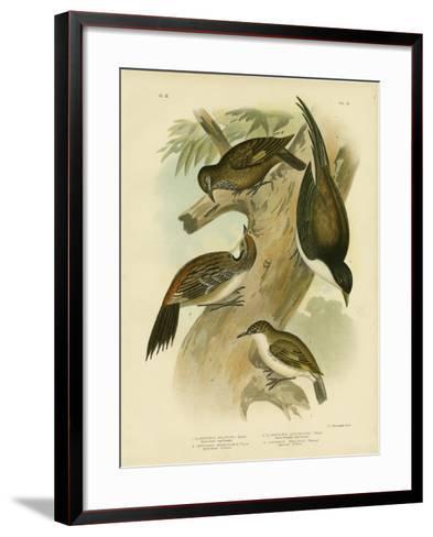 Black-Tailed Treecreeper, 1891-Gracius Broinowski-Framed Art Print