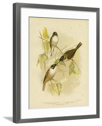 Strong-Billed Honeyeater, 1891-Gracius Broinowski-Framed Art Print