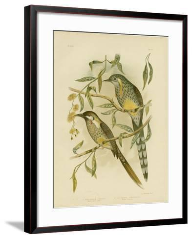 Yellow Wattlebird, 1891-Gracius Broinowski-Framed Art Print