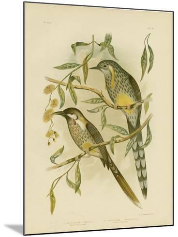 Yellow Wattlebird, 1891-Gracius Broinowski-Mounted Giclee Print
