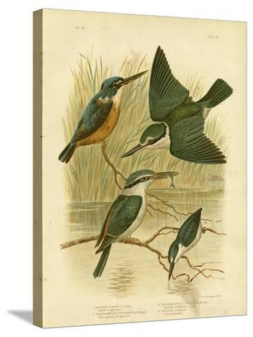 Azure Kingfisher, 1891-Gracius Broinowski-Stretched Canvas Print