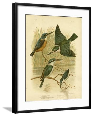 Azure Kingfisher, 1891-Gracius Broinowski-Framed Art Print