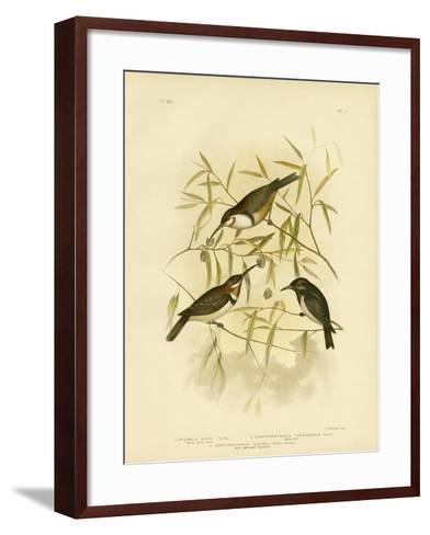 Black Honeyeater, 1891-Gracius Broinowski-Framed Art Print