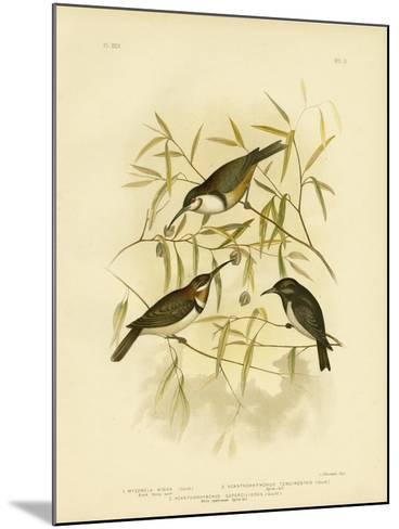 Black Honeyeater, 1891-Gracius Broinowski-Mounted Giclee Print