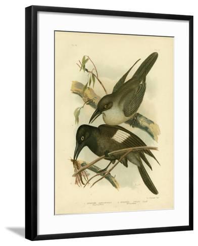 Grey Crow-Shrike, 1891-Gracius Broinowski-Framed Art Print