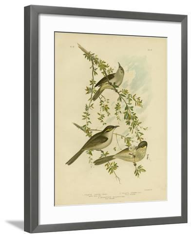 Lewin Honeyeater, 1891-Gracius Broinowski-Framed Art Print