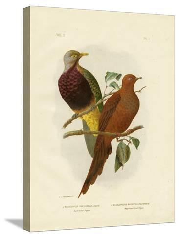 Large-Tailed Pigeon or Brown Pigeon or Brown Cuckoo-Dove, 1891-Gracius Broinowski-Stretched Canvas Print