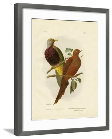 Large-Tailed Pigeon or Brown Pigeon or Brown Cuckoo-Dove, 1891-Gracius Broinowski-Framed Art Print
