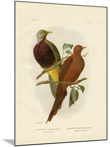 Large-Tailed Pigeon or Brown Pigeon or Brown Cuckoo-Dove, 1891-Gracius Broinowski-Mounted Giclee Print