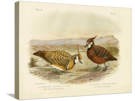 White-Bellied Bronzewing, 1891-Gracius Broinowski-Stretched Canvas Print