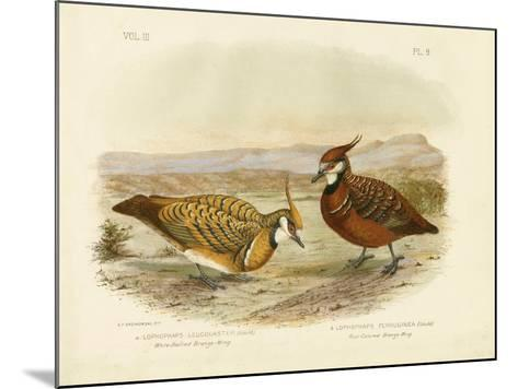 White-Bellied Bronzewing, 1891-Gracius Broinowski-Mounted Giclee Print