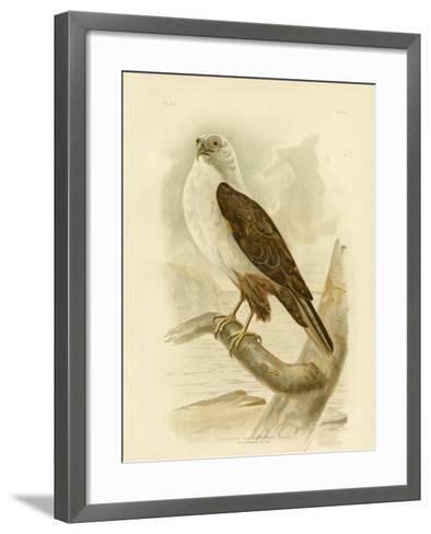 White-Breasted Sea Eagle, 1891-Gracius Broinowski-Framed Art Print