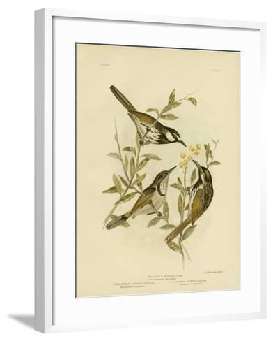 White-Cheeked Honeyeater, 1891-Gracius Broinowski-Framed Art Print