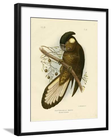 Baudin's Black Cockatoo, 1891-Gracius Broinowski-Framed Art Print