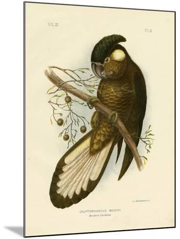 Baudin's Black Cockatoo, 1891-Gracius Broinowski-Mounted Giclee Print