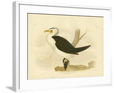 Little Cormorant, 1891-Gracius Broinowski-Framed Art Print