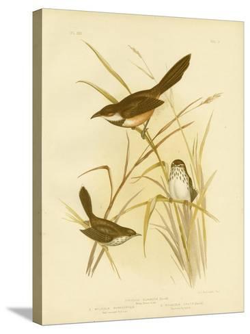 Noisy Scrub Bird, 1891-Gracius Broinowski-Stretched Canvas Print