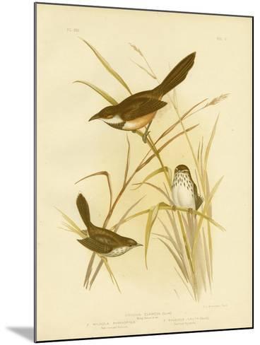 Noisy Scrub Bird, 1891-Gracius Broinowski-Mounted Giclee Print