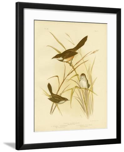 Noisy Scrub Bird, 1891-Gracius Broinowski-Framed Art Print