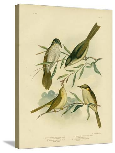 Uniform-Coloured Honeyeater or White-Gaped Honeyeater, 1891-Gracius Broinowski-Stretched Canvas Print