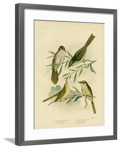 Uniform-Coloured Honeyeater or White-Gaped Honeyeater, 1891-Gracius Broinowski-Framed Art Print