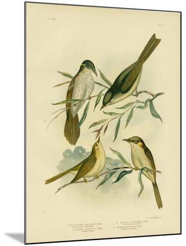 Uniform-Coloured Honeyeater or White-Gaped Honeyeater, 1891-Gracius Broinowski-Mounted Giclee Print