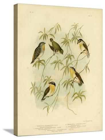 Forty-Spotted Diamondbird or Forty-Spotted Pardalote, 1891-Gracius Broinowski-Stretched Canvas Print