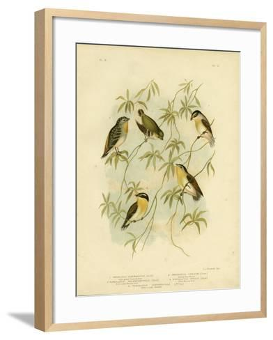 Forty-Spotted Diamondbird or Forty-Spotted Pardalote, 1891-Gracius Broinowski-Framed Art Print