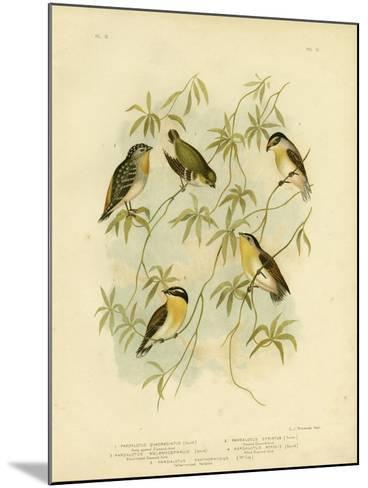 Forty-Spotted Diamondbird or Forty-Spotted Pardalote, 1891-Gracius Broinowski-Mounted Giclee Print