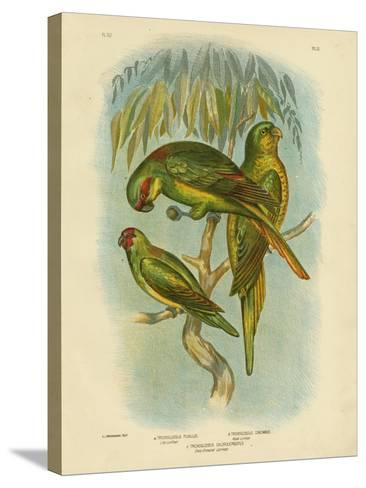 Scaly-Breasted Lorikeet, 1891-Gracius Broinowski-Stretched Canvas Print