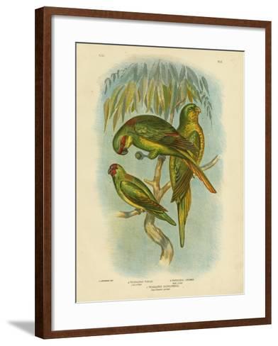 Scaly-Breasted Lorikeet, 1891-Gracius Broinowski-Framed Art Print