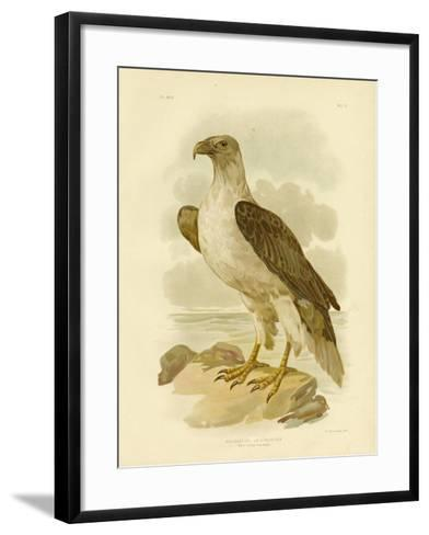White-Bellied Sea Eagle, 1891-Gracius Broinowski-Framed Art Print