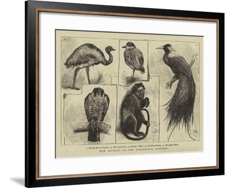 New Animals at Zoological Gardens-Harry Hamilton Johnston-Framed Art Print