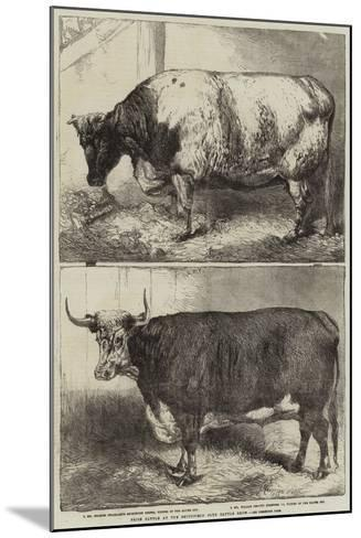 Prize Cattle at the Smithfield Club Cattle Show-Harrison William Weir-Mounted Giclee Print