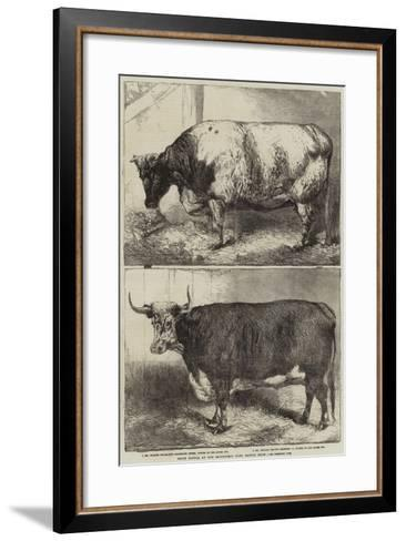 Prize Cattle at the Smithfield Club Cattle Show-Harrison William Weir-Framed Art Print