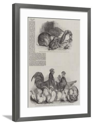 Poultry Show at the Crystal Palace-Harrison William Weir-Framed Art Print
