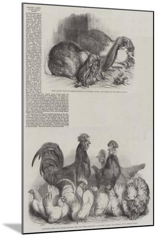 Poultry Show at the Crystal Palace-Harrison William Weir-Mounted Giclee Print