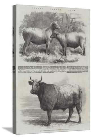 Poissy Cattle Show-Harrison William Weir-Stretched Canvas Print