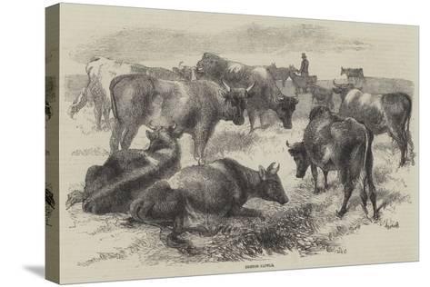 Breton Cattle-Harrison William Weir-Stretched Canvas Print