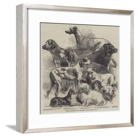 National Exhibition of Dogs at Birmingham-Harrison William Weir-Framed Art Print