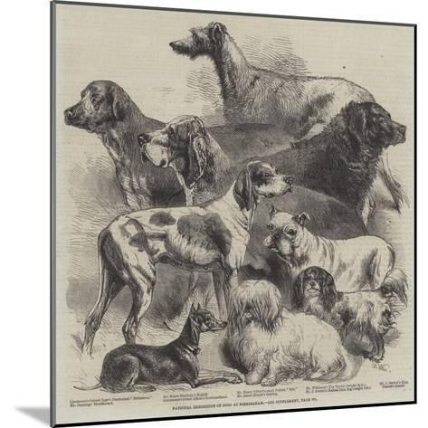 National Exhibition of Dogs at Birmingham-Harrison William Weir-Mounted Giclee Print