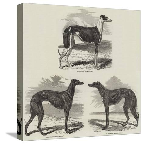Newmarket Coursing Meeting-Harrison William Weir-Stretched Canvas Print