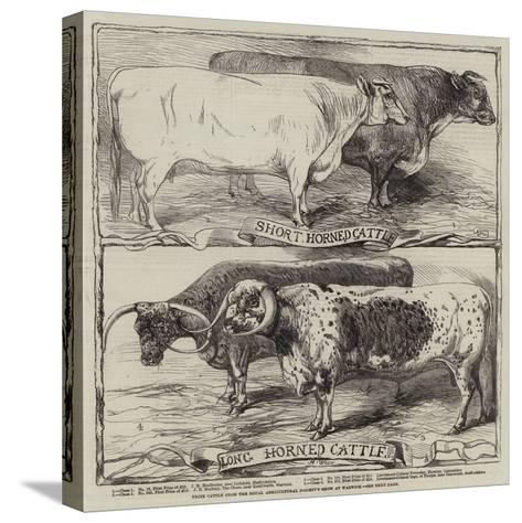 Prize Cattle from the Royal Agricultural Society's Show at Warwick-Harrison William Weir-Stretched Canvas Print