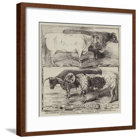 Prize Cattle from the Royal Agricultural Society's Show at Warwick-Harrison William Weir-Framed Art Print