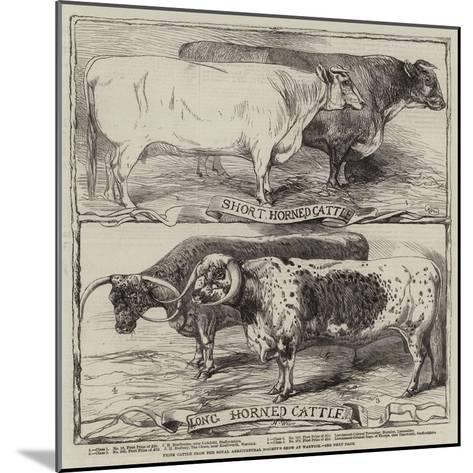 Prize Cattle from the Royal Agricultural Society's Show at Warwick-Harrison William Weir-Mounted Giclee Print