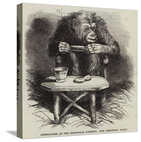 Chimpanzee, at the Zoological Gardens-Harrison William Weir-Stretched Canvas Print