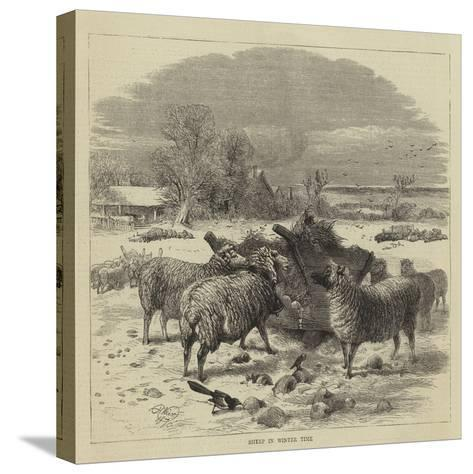 Sheep in Winter Time-Harrison William Weir-Stretched Canvas Print